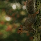 Squirrel by ClaireWroe