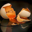Eggsposed Filament by Graham Jones
