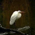 Egret by margotk