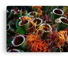 Party Poppers Canvas Print