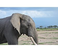 Elephant Close-Up in Kenya Photographic Print