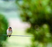 Bird on a Wire by damienbaumgart