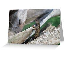 louie the lizard Greeting Card
