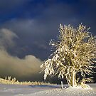 Winter by niklens