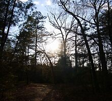 Woods in Late Afternoon by dontlikemyfire