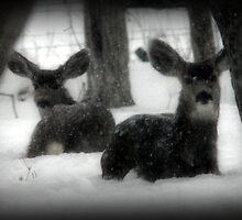 Winter Survival by Ryan Houston