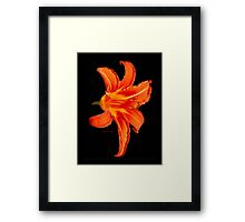 ORANGE DAY LILLY Framed Print