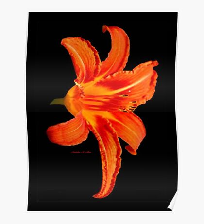ORANGE DAY LILLY Poster