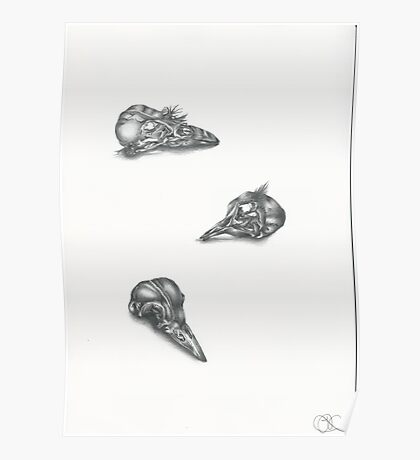 Bird skulls Poster