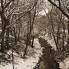 snowy winter woodland by oakes deary