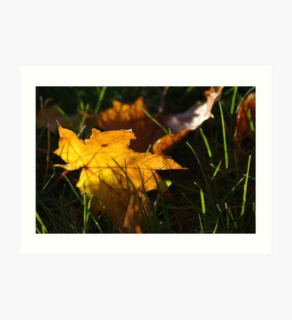 Great fall Art Print