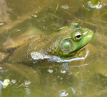 Frog at the minnow pond by inventor