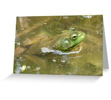 Frog at the minnow pond Greeting Card