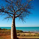 Boab Tree - Town Beach, Broome by Renee Hubbard Fine Art Photography