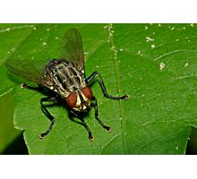 March Fly Photographic Print