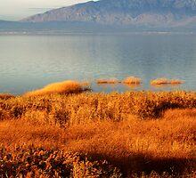 Golden Reeds by Ryan Houston