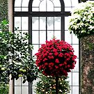 Christmas in the Conservatory by AngieDavies