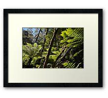 Otway Ferns Framed Print