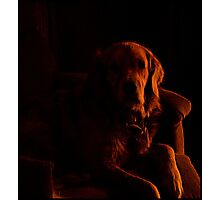 Dog in Shadow Photographic Print