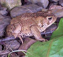 Toad by Martha Medford