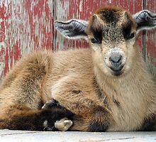 Goat by Beaner