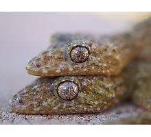 Broad Tailed Gecko Australia Photographic Print