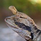Australian Reptiles by Steve Bullock