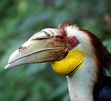 Hornbill Headshot by Frank Yuwono