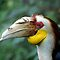 Hornbill Headshot by Frank Yuwono
