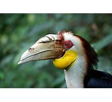 Hornbill Headshot Photographic Print