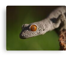 Golden Tailed Gecko Canvas Print