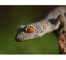 Golden Tailed Gecko Photographic Print