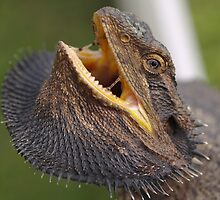Steer Clear - Eastern Bearded Dragon by Steve Bullock