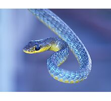 Blue - Green Tree Snake Photographic Print