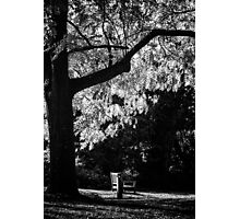 Monochrome Bench Under the Tree Photographic Print
