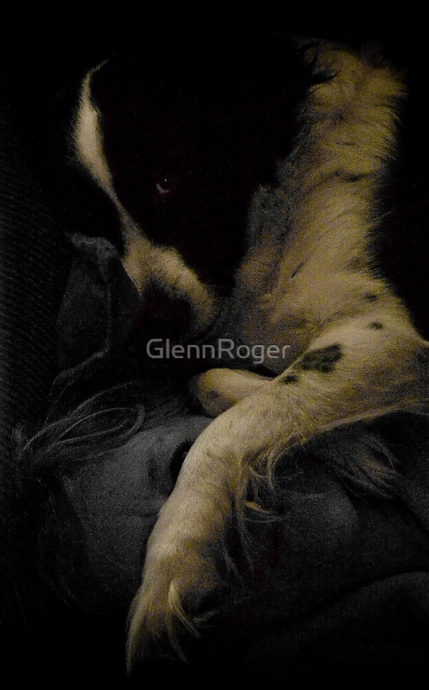 A dogs life by GlennRoger