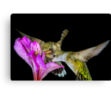 Two for Nectar Canvas Print
