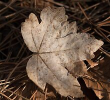 Autumn Leaf by Robert Carr