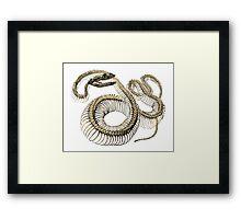 antique typographic vintage snake skeleton Framed Print