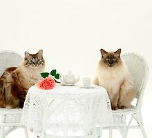THE TEA PARTY by Diane Peresie