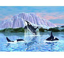 Killer Whales Photographic Print