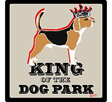 Beagle King of the Dog Park Photographic Print