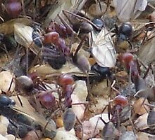 ants and thier home by wend
