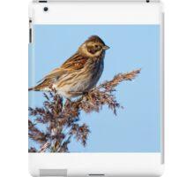 Reed Bunting iPad Case/Skin