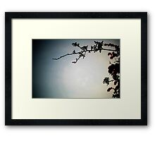 Tree & Sky Framed Print