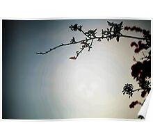 Tree & Sky Poster