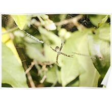 St Andrews Cross Spider Poster