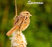 HIS EYE IS ON THE SPARROW by Diane Peresie