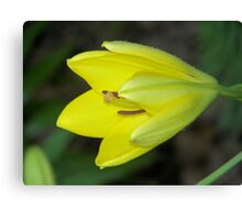 Yellow Display Canvas Print