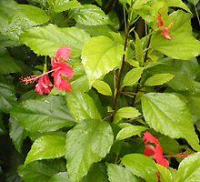 Red Flowers by Rachel Hoffman